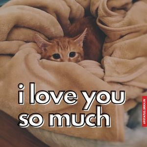 I Love You cute images full HD free download.