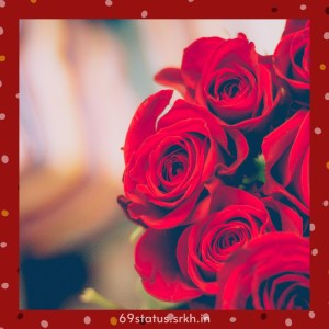 Red rose image for Love full HD free download.