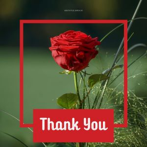 Thank You Images with Flowers full HD free download.
