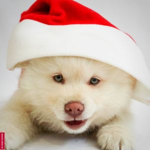 Christmas Dp Images full HD free download.