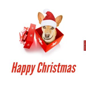 Christmas Images Free Download full HD free download.