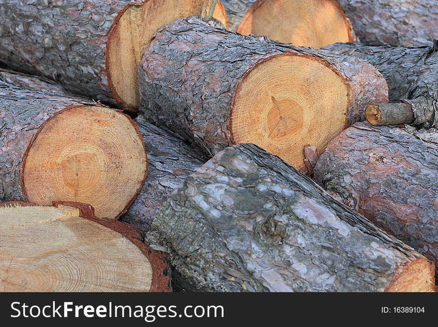 pine tree logs free