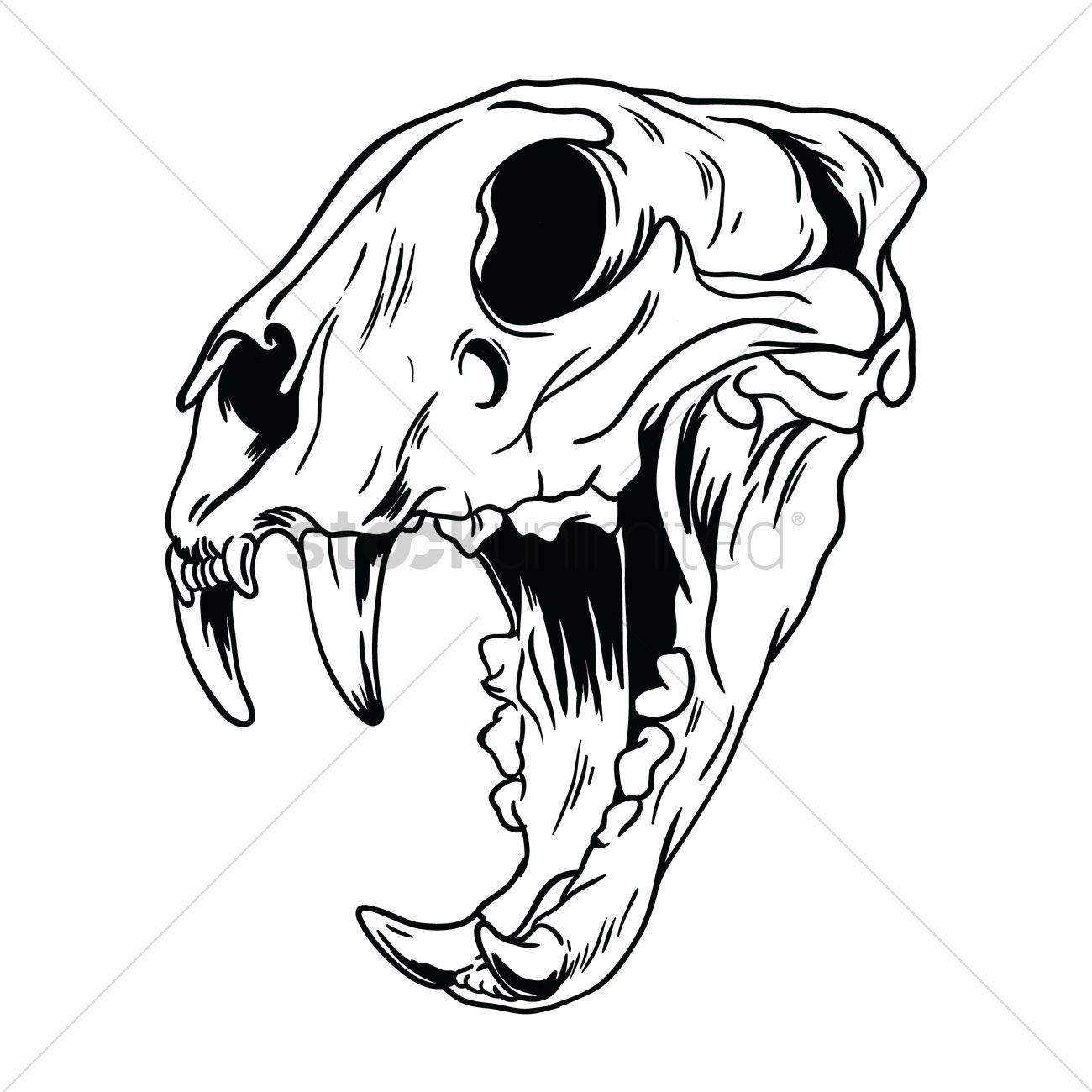 Tiger Skull Drawing