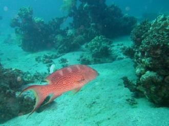 Dahab - Điểm hẹn lí tưởng cho du lịch lặn biển