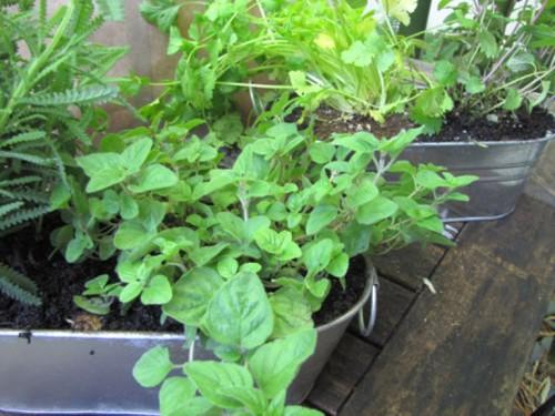 Tự tạo vườn treo xanh mát trước nhà - Archi