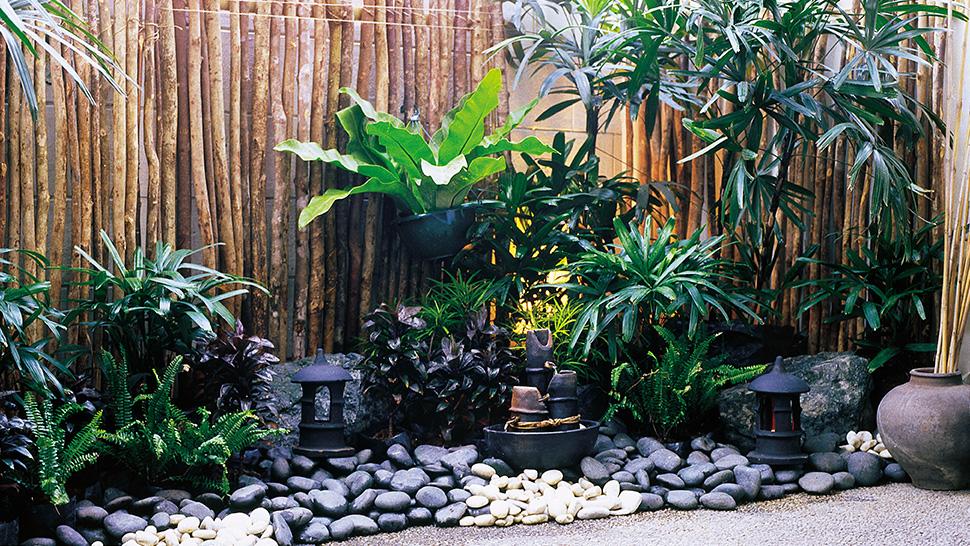 Start A Pocket Garden Today
