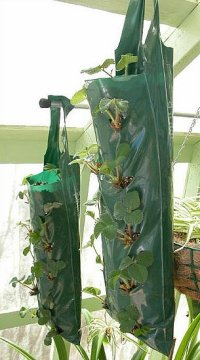 DIY: Hanging Grow Bags for Your Plants | POPSUGAR Home