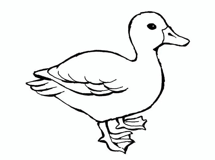 5 Little Ducks Template