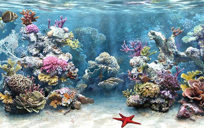 50 best aquarium backgrounds free