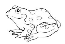Frog Template Animal Templates Free amp Premium Templates