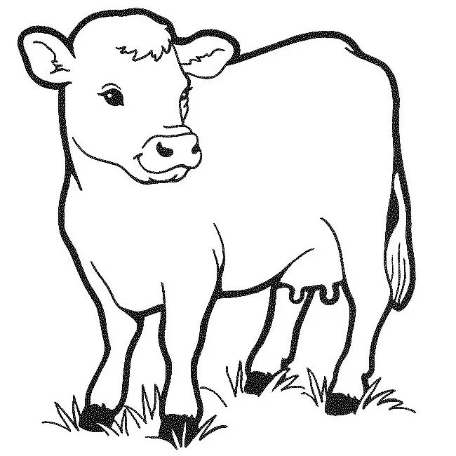 cow templates to print