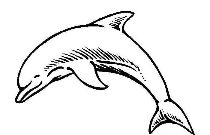 Dolphin Accounting Program Free Download
