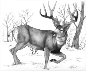 deer drawing drawings cool pencil sketch realistic template templates designs artist