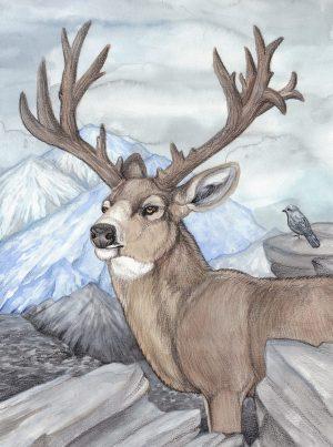 deer drawing drawings pencil templates designs template premium amp getdrawings ultimate
