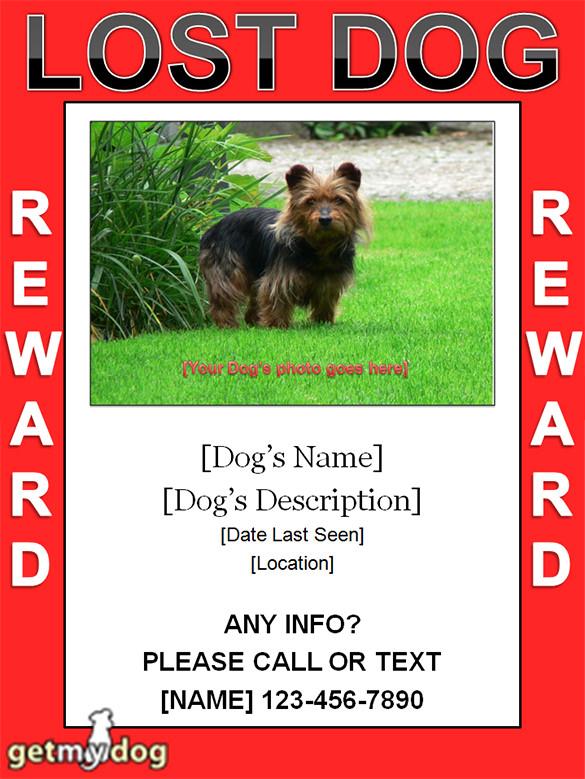 11+ Psd Lost Dog Flyer Templates  Free & Premium Templates
