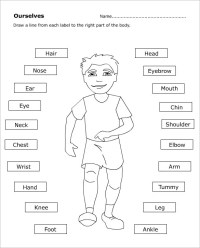Printable Human Body Parts For Kids