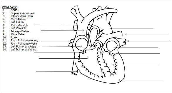 pics photos heart diagram labeled system heart diagram