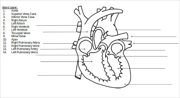 18+ Heart Diagram Templates