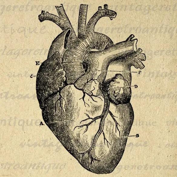interior heart diagram starter panel wiring 18+ templates – sample, example, format download | free & premium
