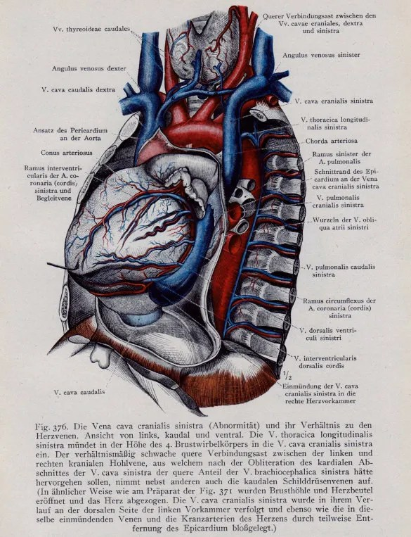 label heart diagram food guide 18+ templates – sample, example, format download   free & premium