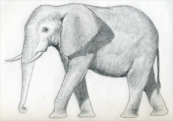 Elephant Drawings 24 Free Printable Jpeg Png Format Download Free Premium Templates