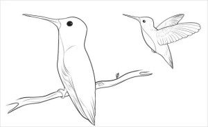 easy drawing bird template templates drawings pdf dragoart