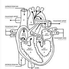 Eye Anatomy Vintage Diagram Wiring For 4 Wire Round Trailer Plug 19+ Heart Templates – Sample, Example, Format Download | Free & Premium