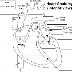 Heart Diagram Inside Weed Eater Carburetor Diaphragm 19 Templates Sample Example Format Download Label Interior Doc Format31