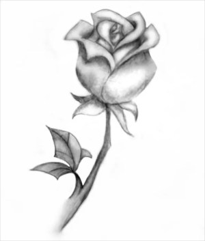 rose drawing easy sketch templates shaded drawings simple template sketches paintingvalley webcomicms