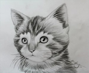 drawings animals awesome drawing animal kitten easy really amazing pencil pencils clipart hand deviantart sketches cats funny kitty arch student
