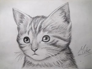 drawing kitty drawings cat deviantart pencil sketch animal realistic face animals cats simple funny kitten sketches kittens butterfly