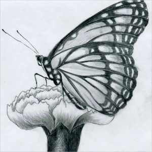 drawing drawings easy butterfly cool tattoo templates template flower buterfly background minimally yourself designed clean features