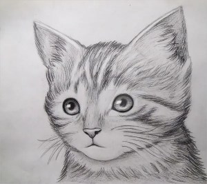 drawing cool cat drawings easy