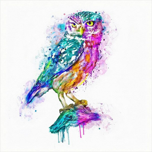 Colorful Owl Art