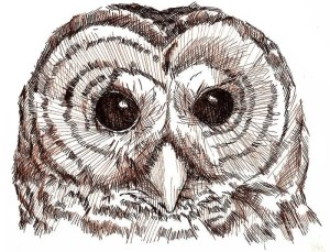 pen ink owl drawing drawings sepia examples heather davis 4x6 animal templates pencil