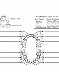 Baby milk teeth chart also free pdf documents download  premium rh template