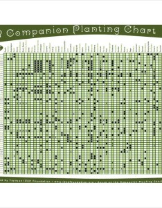 Printable companion planting chart also free excel pdf documents download rh template