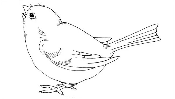 bird: Preschool Bird Template Printable