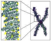 """""""Epigenetics"""" drives phenotype?"""