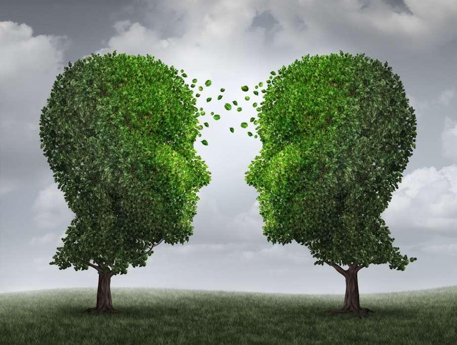how trees communicate via