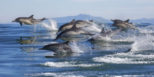 Image result for ocean dolphin