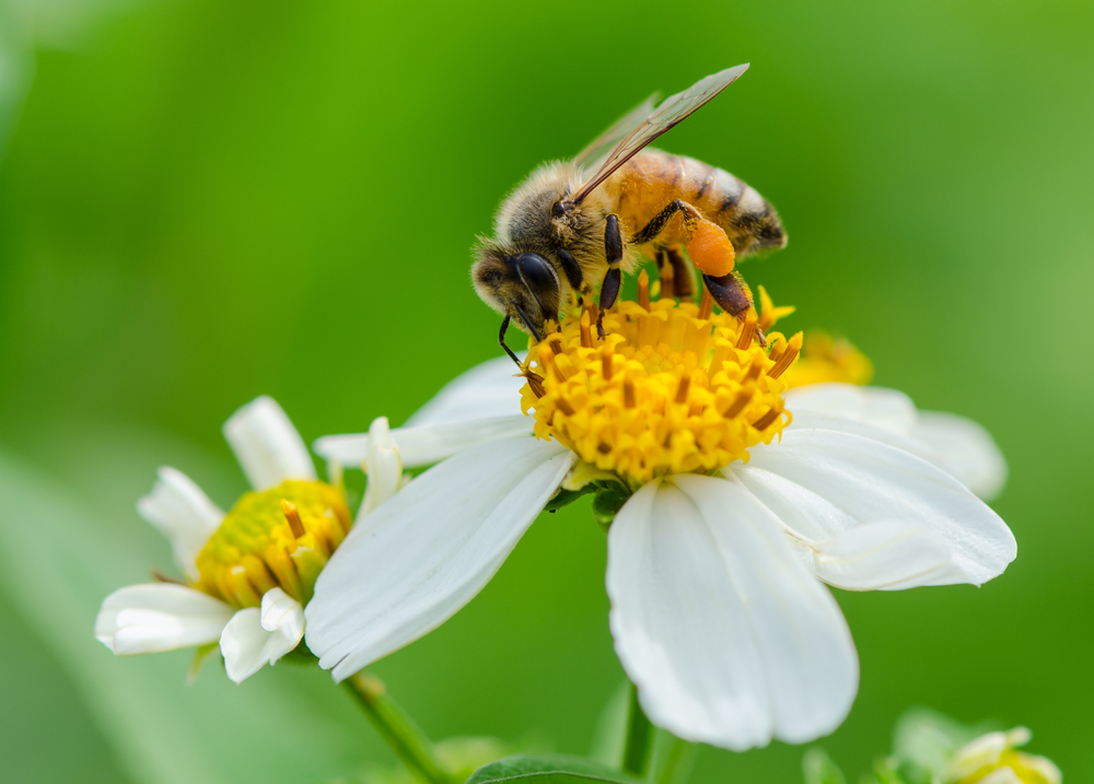 bees in the city designing green roofs for pollinators