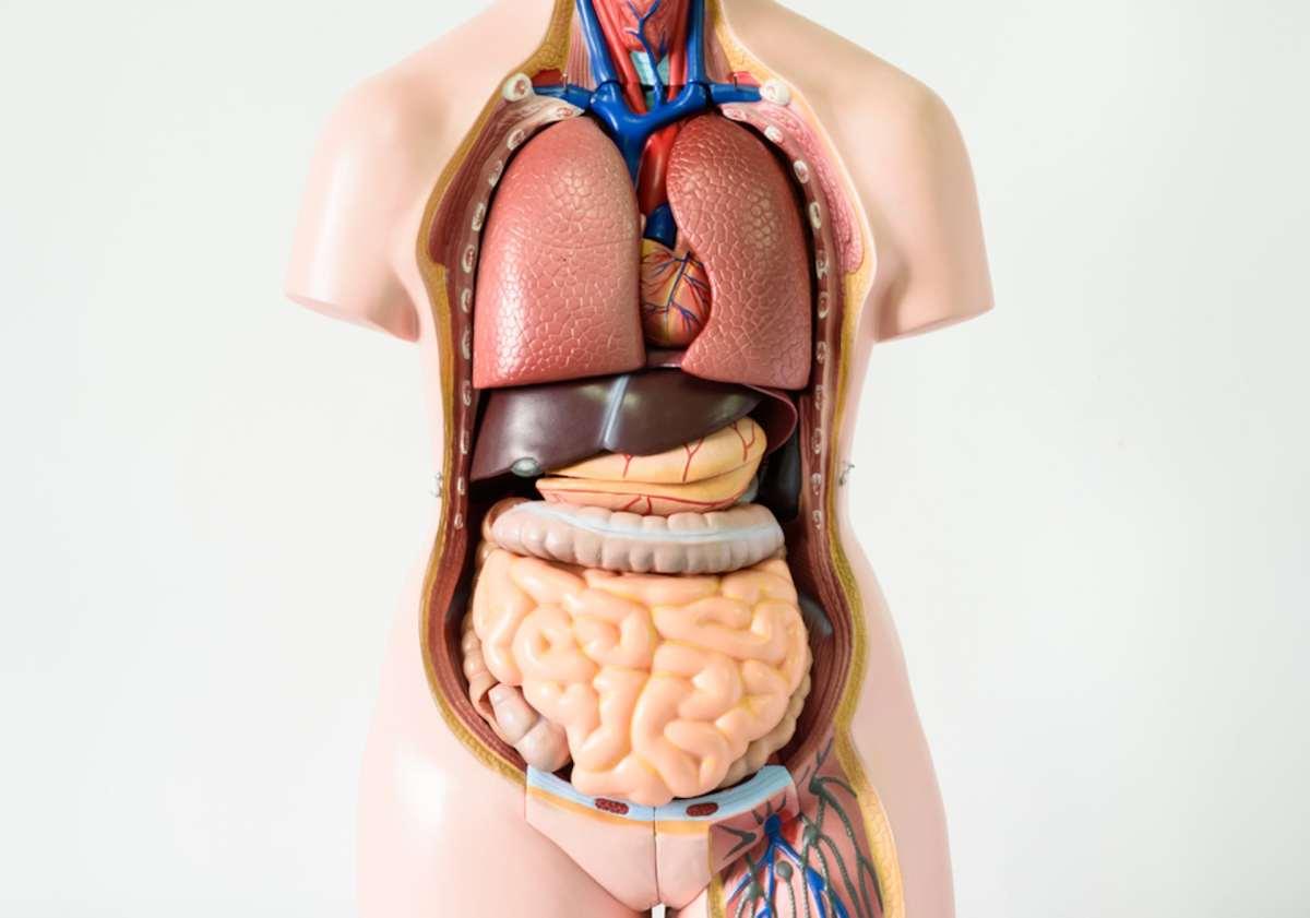 diagram of lower belly [ 1200 x 1200 Pixel ]