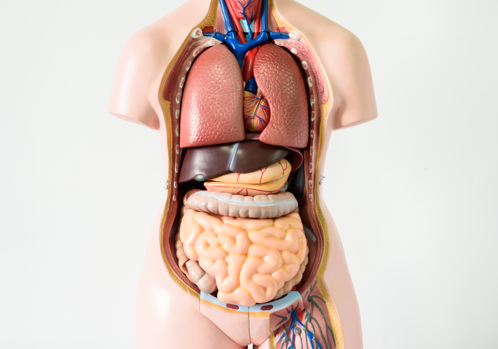 diagram of ribs and organs sr20de wiring seven body you can live without
