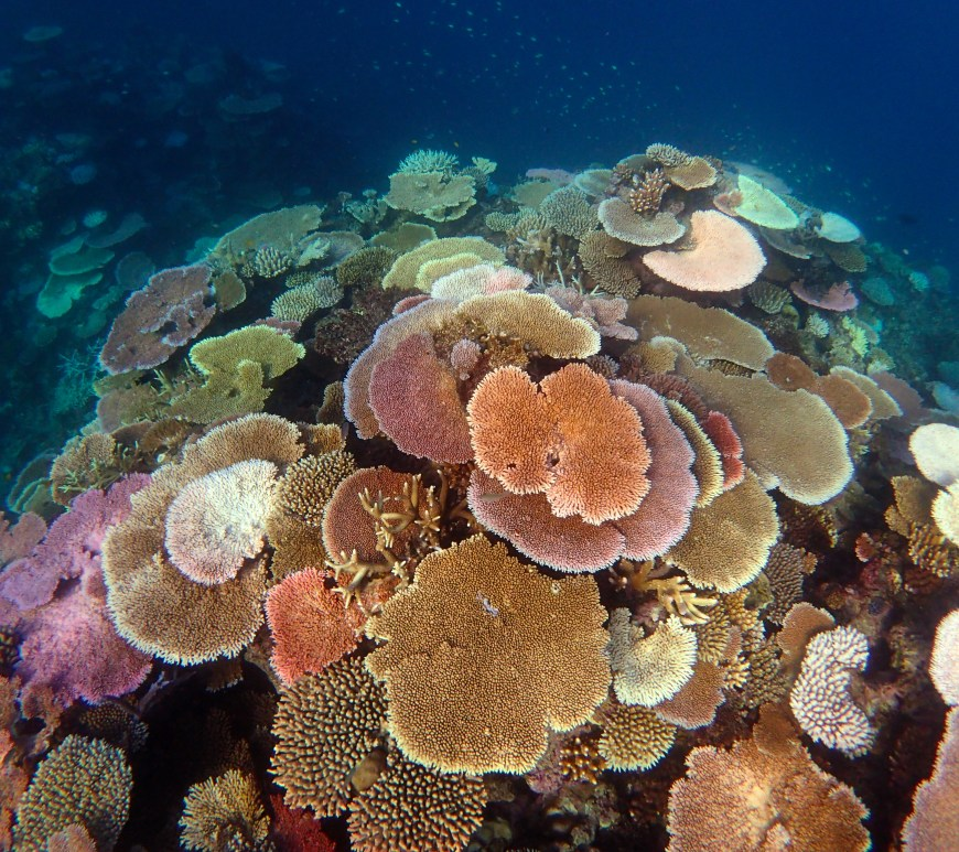 The Great Barrier Reef Can Repair Itself With A Little Help From Science