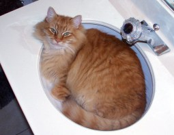 Here a cat, whose body fits perfectly within a sink, behaves like a liquid. William McCamment, CC BY-SA