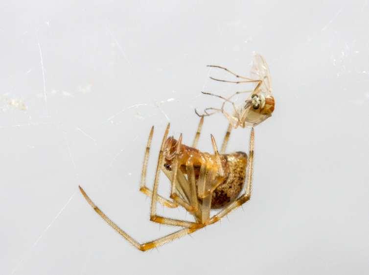 kill spiders - tech urdu