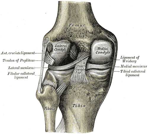 so they can t be felt unless there is a large tear often resulting from a major injury in fact most people with a torn meniscus don t have knee pain  [ 1000 x 908 Pixel ]