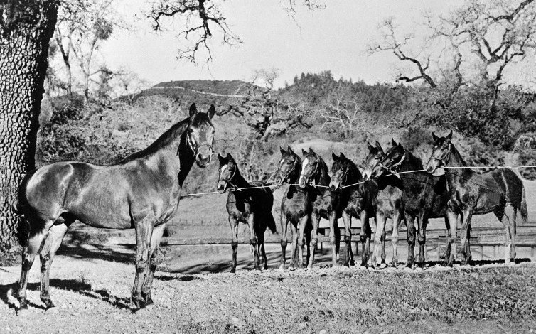Seabiscuit as a retired 7-year-old, with some of his offspring at Ridgewood Ranch in California.