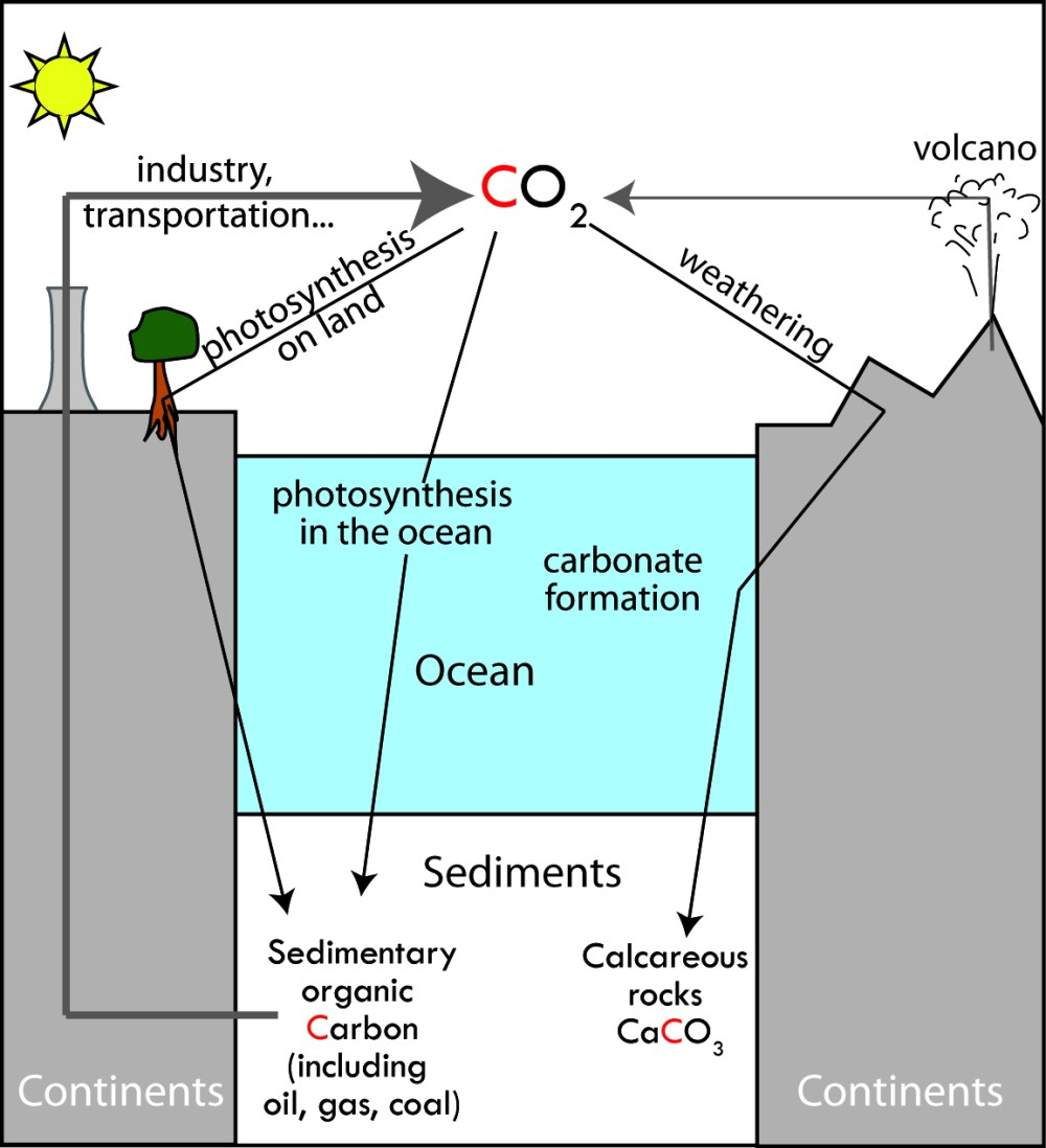 simplified geological carbon cycle the sinks black show the sedimentation of organic matter and the alteration synthesis coupling of carbonate  [ 1000 x 1099 Pixel ]
